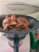 Crabs 3 minutes to go