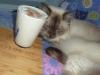 Thermo-cat Jemima's Banana Smoothie