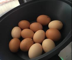 Dozen boiled eggs